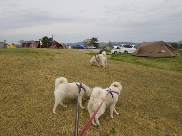2014.4.28 キャンプ場1