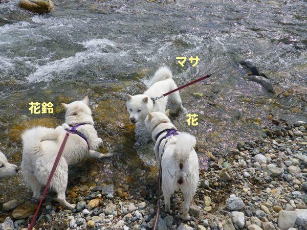 2014.4.28 川遊び2