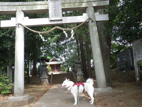 2014.5.15 桜丘宇山稲荷神社