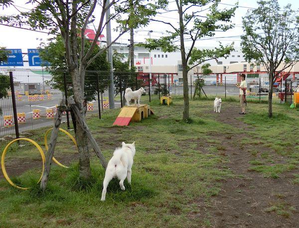 2014.7.27 苫小牧港ドッグラン