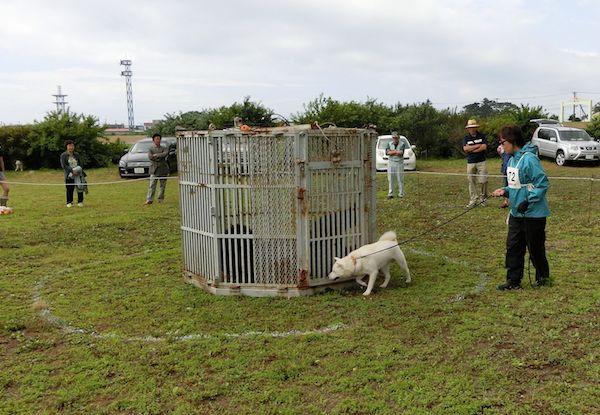 2014.7.27 鵡川支部展・竜牙の獣猟競技(4.8点)