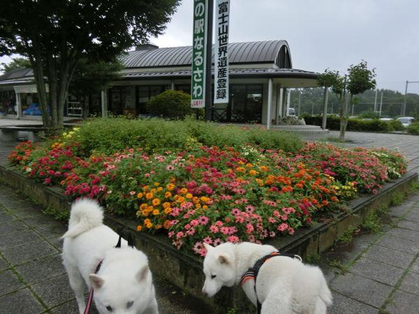 2014.8.14 道の駅なるさわ