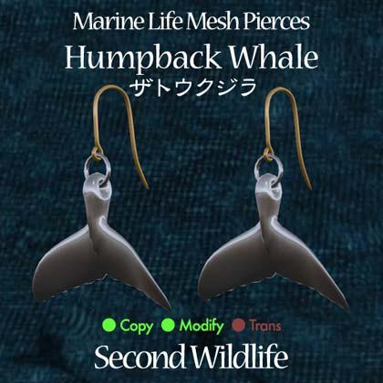 PiercePop_humpback.jpg