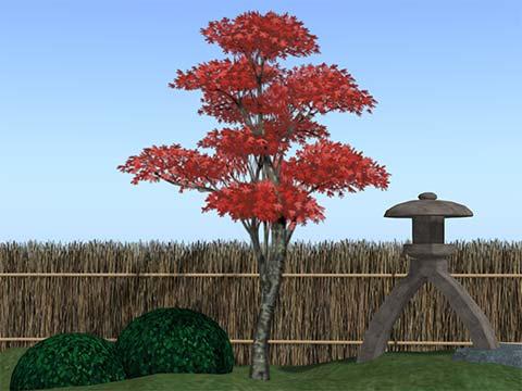 kaede_autumn.jpg