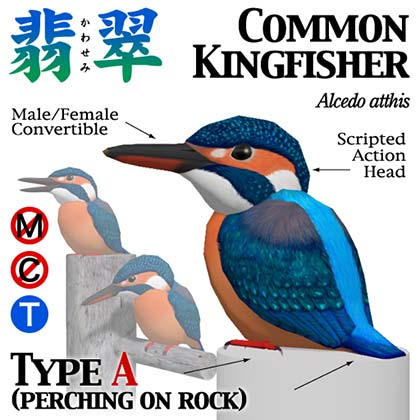 kingfisher_popA.jpg