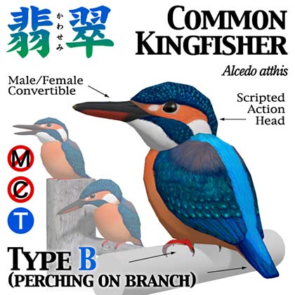 kingfisher_popB.jpg