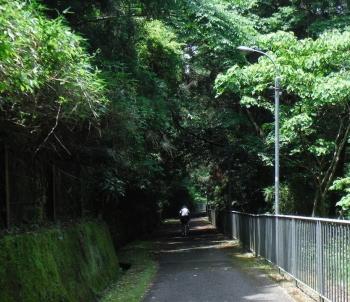 南海沿いの小道1 (2)