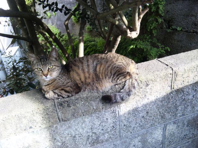 長田区野良猫 丸山