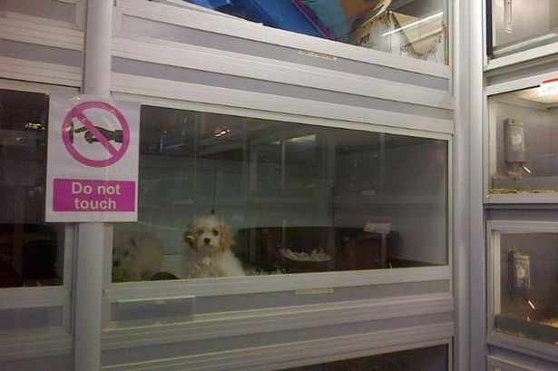 Dogs-kept-in-small-tanks-at-Jumanji-Pet-Shop-in-Kilburn-North-London-2484783.jpg
