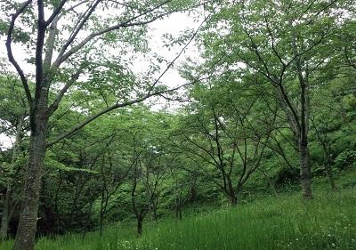 なんかいそうな塚山の森