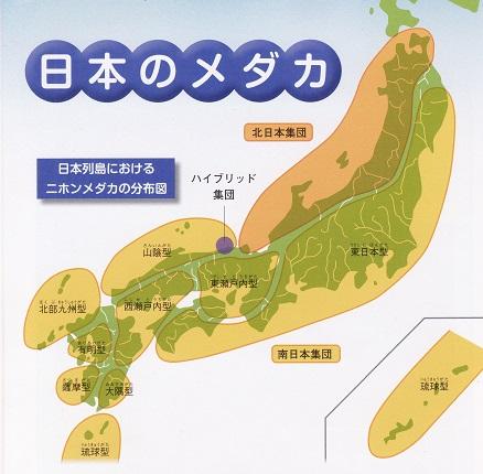日本列島のメダカ分布図
