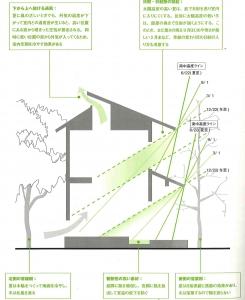 落葉樹と太陽角度