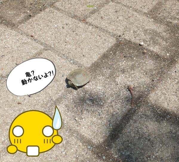 25.4亀?