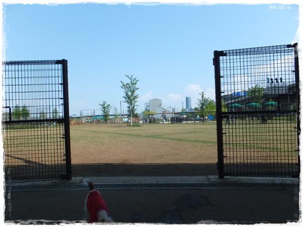 26.4新横浜ドッグラン7