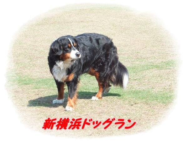 26.4新横浜ドッグラン1