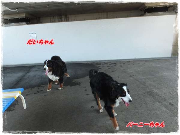 26,4進ヨコハマドッグラン6