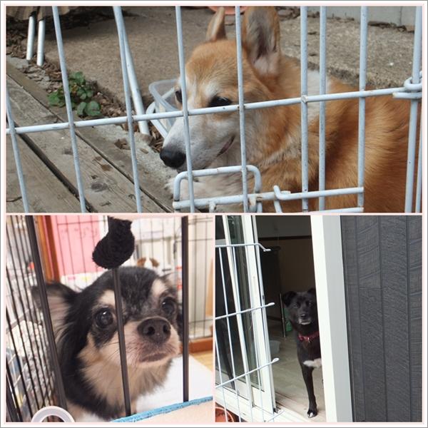 26-8保護犬たち