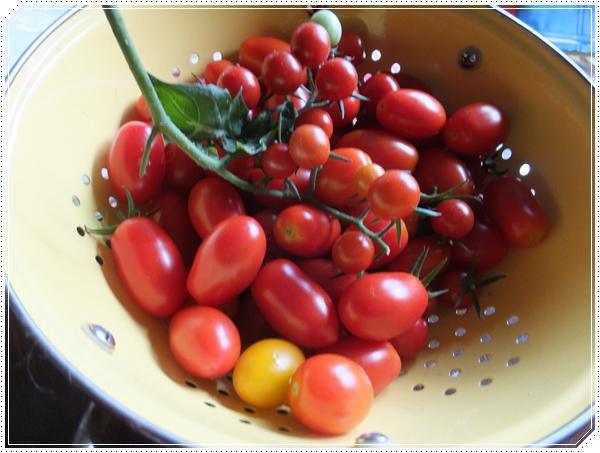 26-8ミニトマト