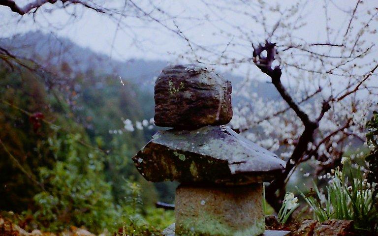 長楽寺の梅-4