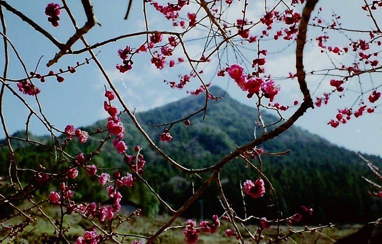 梅の里 川売-2