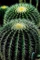 cactus-404362_640.jpg