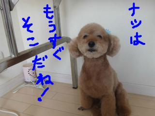 snap_emudog_201471151228.jpg