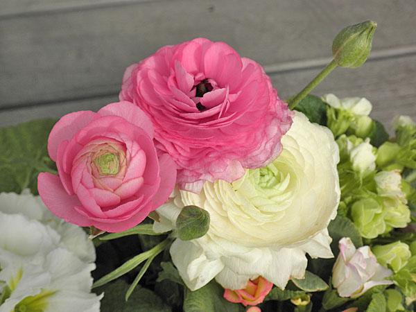 20140219花②