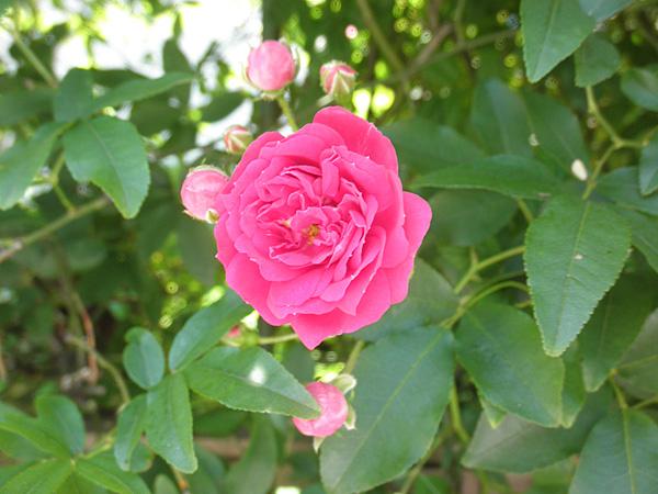 20140518花④