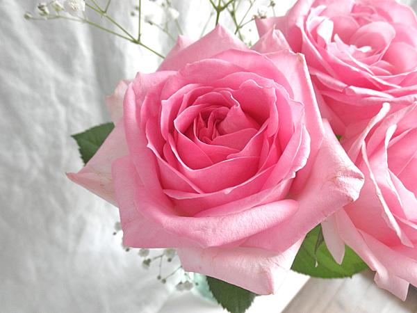 20140619薔薇②