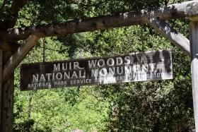muirewoods01