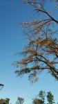 青空12月1