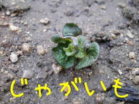 2014041103.jpg
