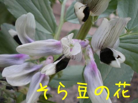 2014041106.jpg