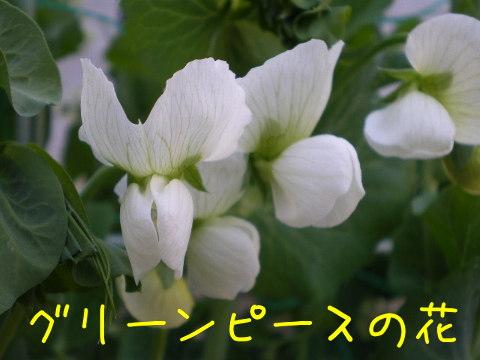 2014041108.jpg