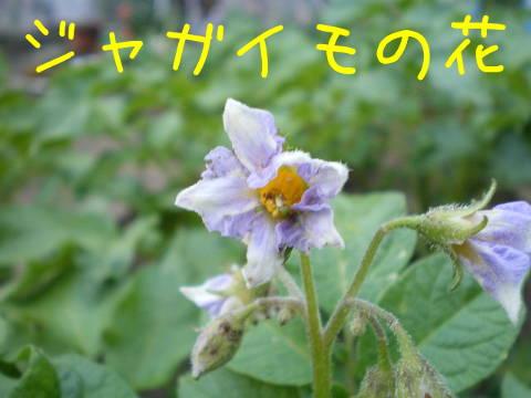 2014051901.jpg
