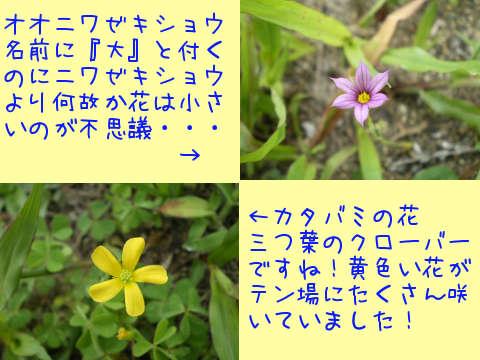 2014070603.jpg