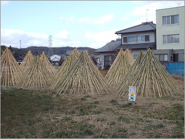 竹の寒干し