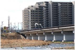 140308E 158飛アオサ日野橋