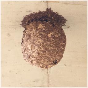 140329E 093蜂の巣