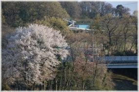 140406E 096都県境桜