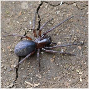 140412E 103蜘蛛