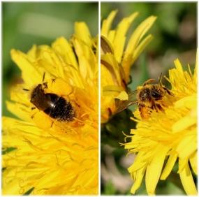 花粉虫49P