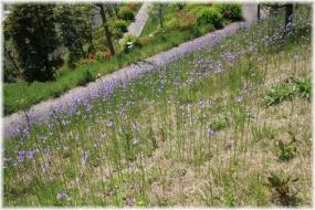 140427E 096紫花