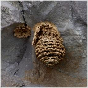 140523E 054蜂の巣