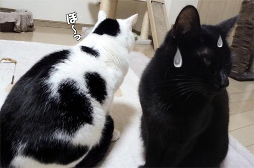 ブチ猫と黒猫