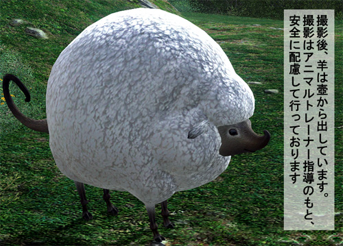 羊は壺から出してます