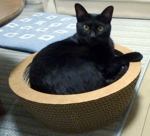 段ボールボウルの黒猫