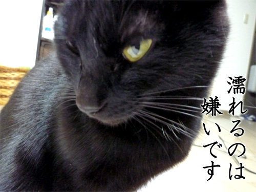 濡れるのは嫌いな黒猫