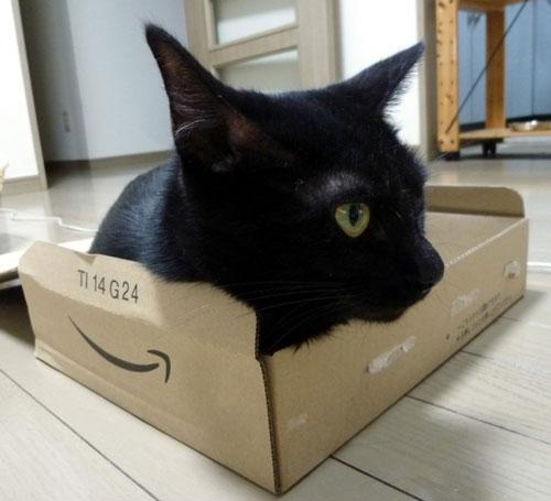 アマゾン箱の黒猫2