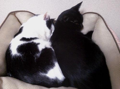二匹でぎゅうぎゅう猫